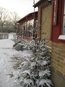 vinter orangeri